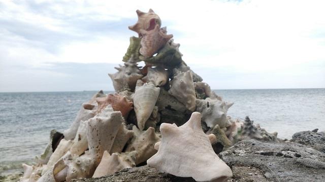 Sea shells on a beach in Belize